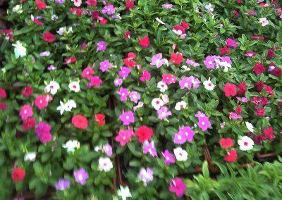 2011-05-04_18-46-44_352