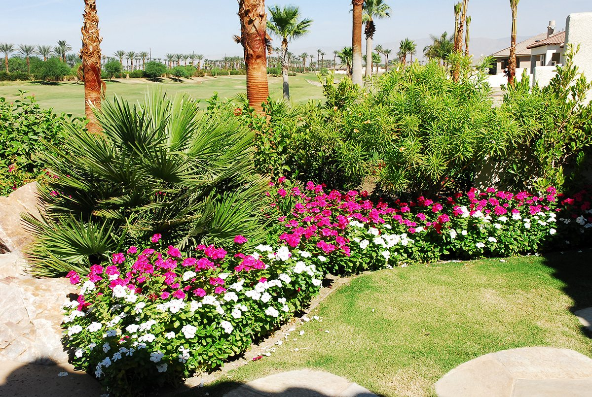Landscape Residential Teserra Outdoors Palm Springs Ca