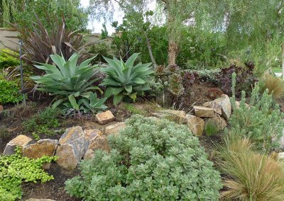 phormium-and-other-shrub
